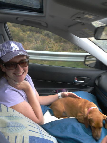 Bassie travelling in comfort, on mom's lap the WHOLE way
