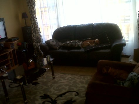 Doggies relaxing in the lounge