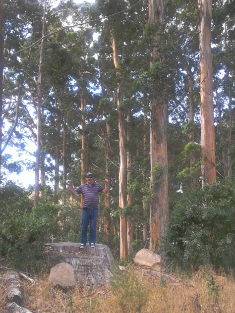 Dad tried the Cecelia Forest hike too - look how tall those trees are!