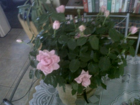 Pretty flowers from my family