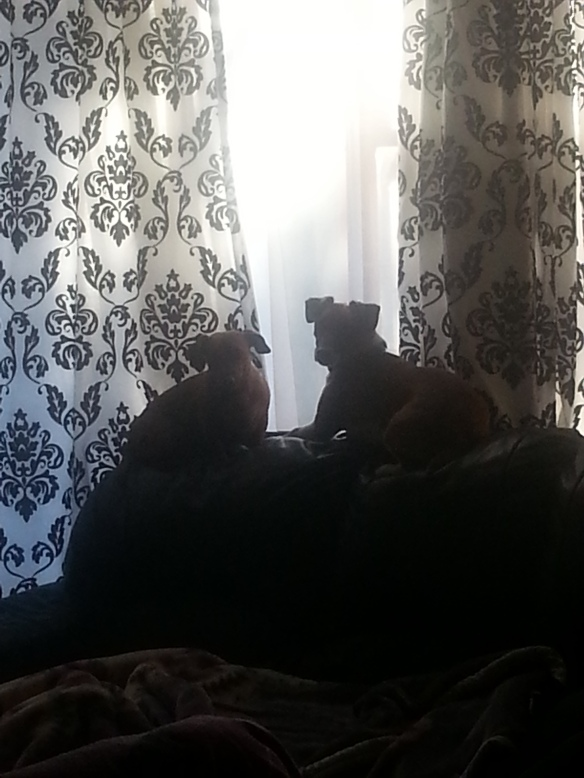 Not the clearest shot - doggies waiting on the couch for mom to get home from work