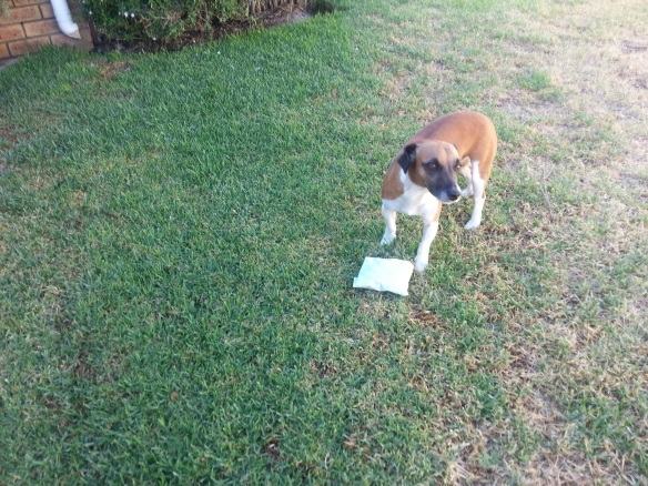 Bertie took his present outside but didn't manage the complicated opening process