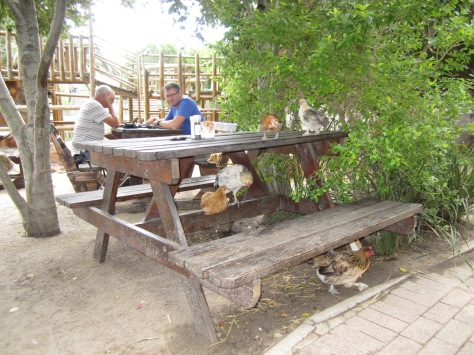 Lunch at the Driftwood Cafe is always filled with the sound of ruffled feathers as various birdies come to see what you're eating