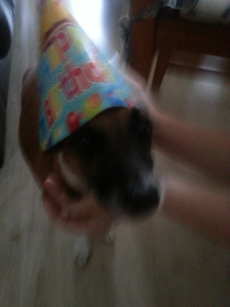 Birthday boy wearing the family birthday hat, teehee - moves so fast that he's a blur in most photos