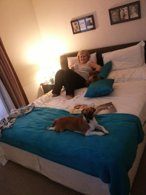 Mom and doggies watching TV together