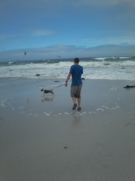 Bertie leading his dad straight towards the sea birds