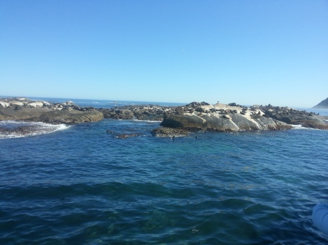 The smelly seals at Duiker Island