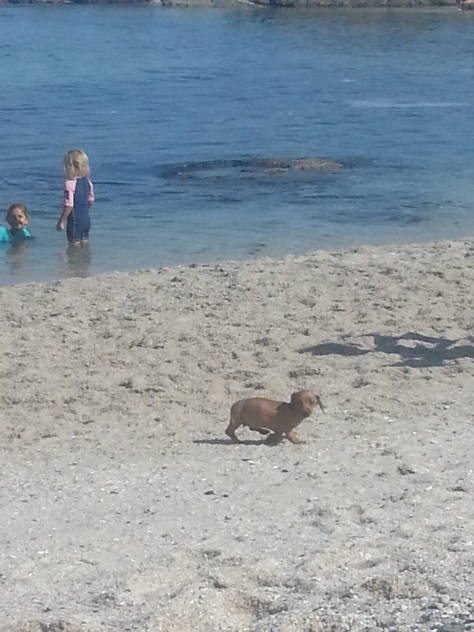 The sweetest little doggie on the beach! Reminded me of Tabasco a handful-plus years ago