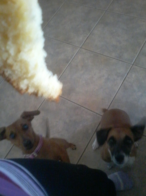 Doggies waiting for a piece of granny's granadilla yoghurt cake
