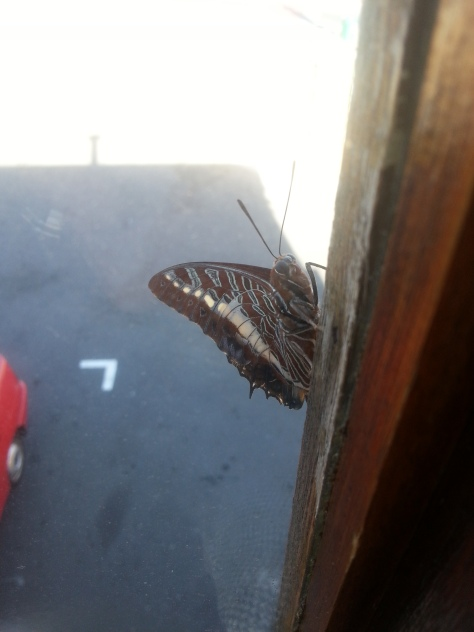 Interesting photo of a butterfly outside Poole