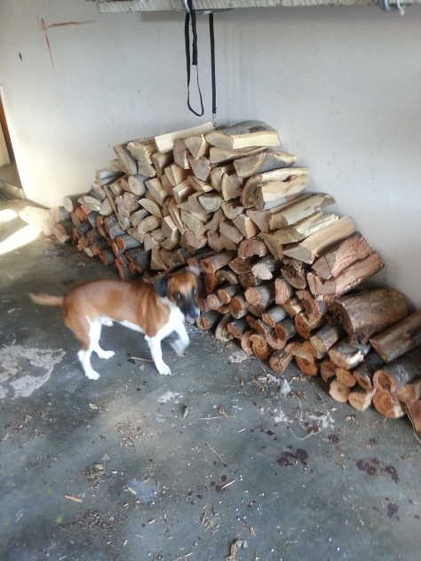 Bertie, pleased with the wood pile