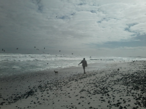 Bertie pulling his dad along the mussel-strewn sand to bark at assorted sea birds