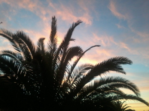 Pretty pink clouds behind a palm tree