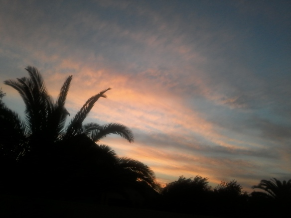 Sun-kissed streaky clouds above my palm tree