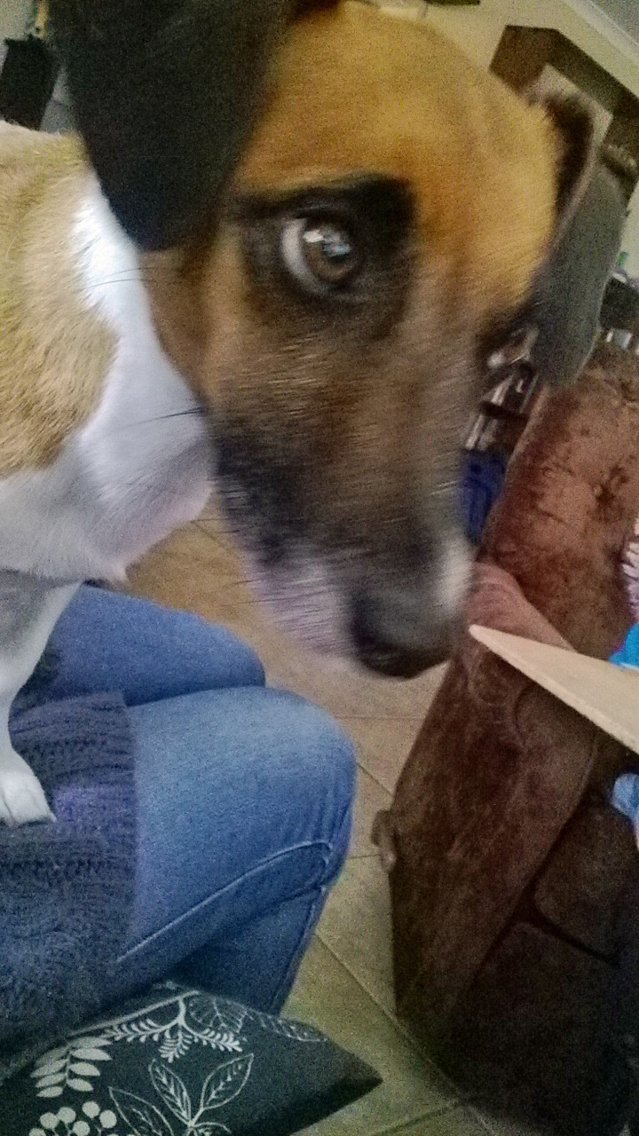 Mini Dog Treat Cutters
