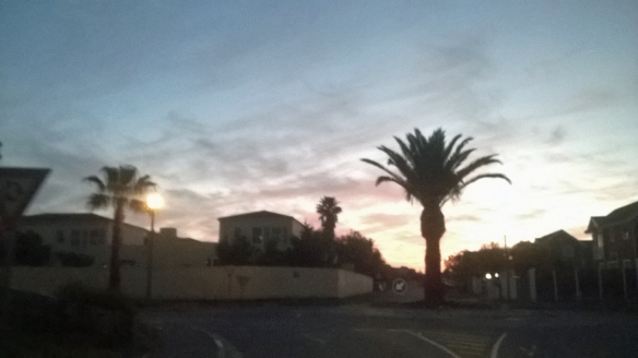 Sunset palm trees near home