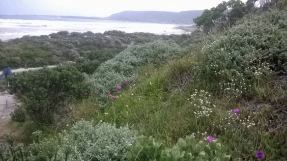 Husband admiring the sea view after a quick walk through the Hermanus fynbos