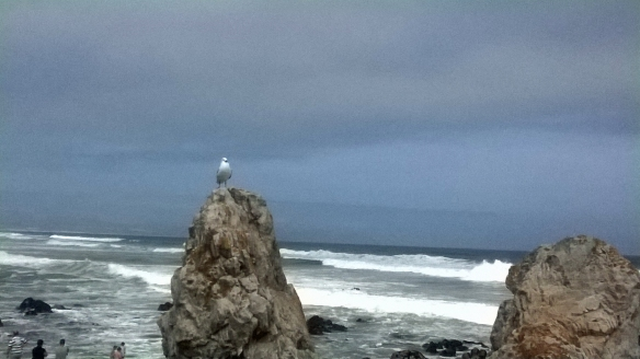 Seagull proudly guarding the Hermanus sea
