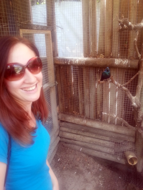 Following a brief (powerless again) nap at home, we headed out to World of Birds in Hout Bay. This was a happy parrot who kept greeting us - and when I offered him my map of the area he had a nibble, teehee