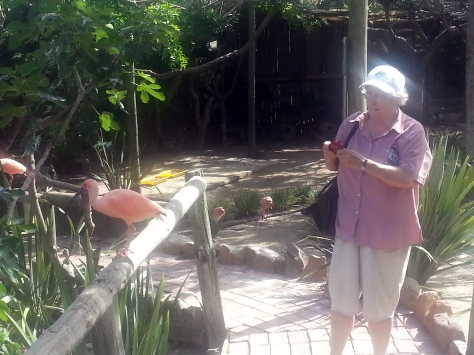 Mother in pink with the scarlet (orange) ibises
