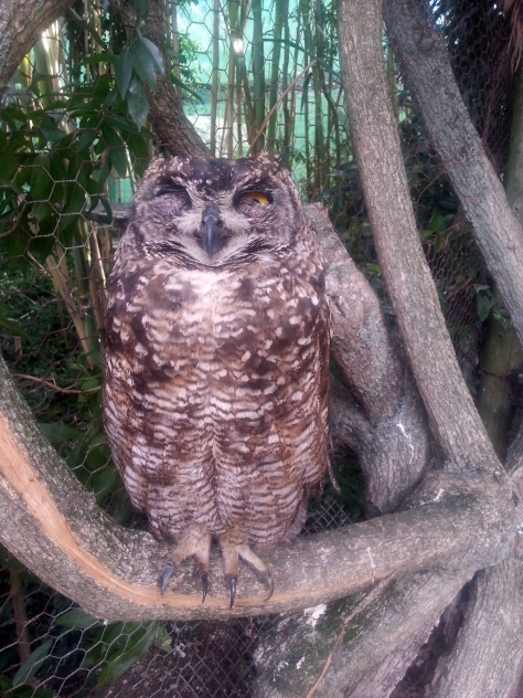 Best! Look how this owlie winked at me! We didn't zoom in, he let us get this close with the camera (phone)