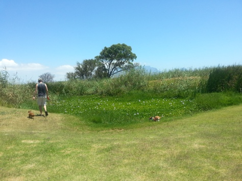 After a nap, we took the doggies for a wander around McPherson's - here you can see Bassie trotting along at her dad's side, and Bertie quite a way behind them. Oops, 'No Bassie photos' fail #4...