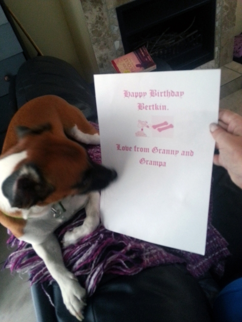 Bertie reading (and licking) his birthday card from Granny and Grampa when we got home that afternoon