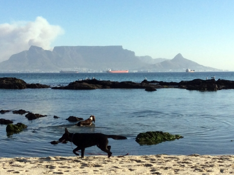 Everyone and their dog was at the beach. That's the smoke of the awful Table Mountain fire just under the cloud to the left