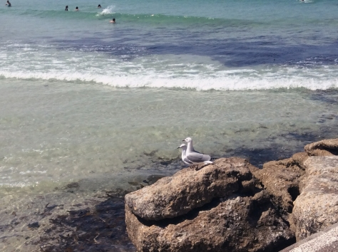 These two seagulls watched all the action in the sea then took off sadly, as though they wished they could have had a paddle. Wet feathers are no fun