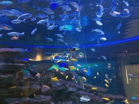 Morning tea break wander through the Aquarium. So many fish, so little time