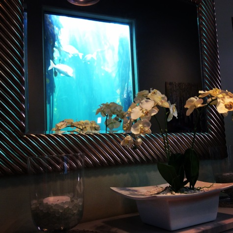 Imagine how distracting this view was. So amazing to be almost among the fish for the day. The orchid in front of the mirror is delightful, too