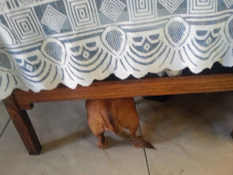 The table has a tail! Oh wait, that's Bassie hiding from the camera. Funny child.