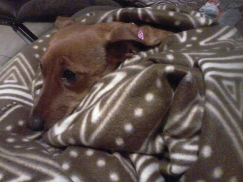 Bassie all snug in her brand new blanket from Granny.