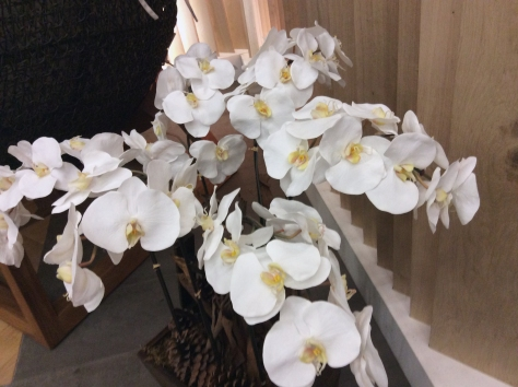 Beautiful orchid display. I'd love one but they're fussy children, I hear.