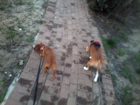 They LOVED all the new sights and smells!