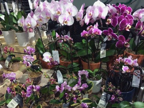 Gorgeous selection of orchids on display at Woolworths at the Waterfront, when I stopped in for a wander before an evening event on Thursday.