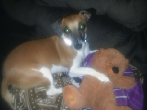 Dog sitting on couch with teddybear
