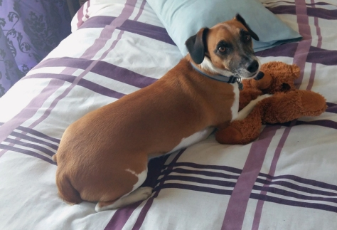 Leigh's dog Bertie playing with his bear