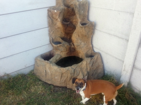 Leigh's dog Bertie in front of the new water feature in their garden