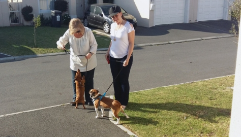Leigh and her mom taking her dogs Bassie and Bertie for a walk in Sunningdale
