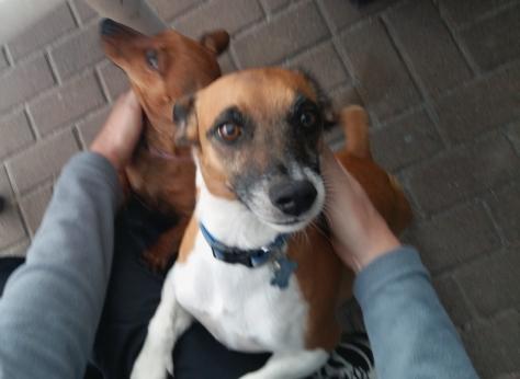 Leigh's dog Bertie