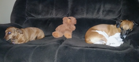 Leigh's dogs Bassie and Bertie on the couch with Bertie's toy