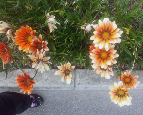 Orange flowers in Century City