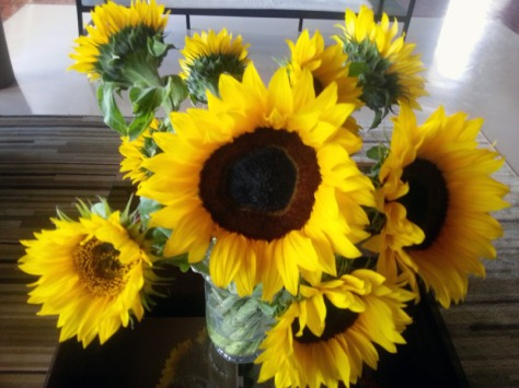 Sunflowers at Design Indaba offices.