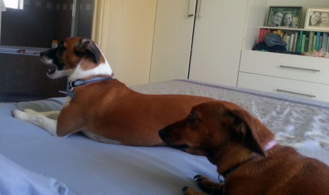 Dogs on new bedding