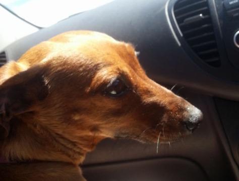 Leigh's dog Tabasco at Kreeftebaai