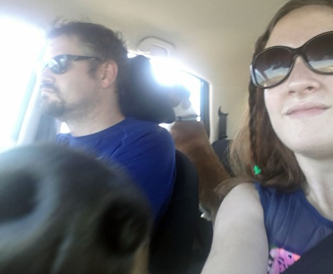 Post-beach walk. There's Bertie in the back seat barking at all the birdies and telling all the other doggies he's been to the beach, while Bassie offers her nose to the camera.