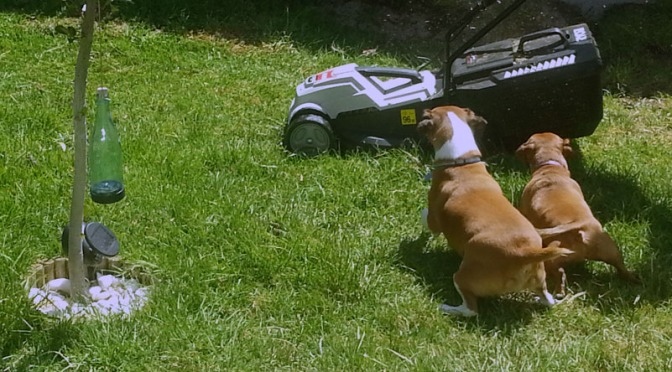 The best milkshake in Cape Town and doggies discover the lawnmower