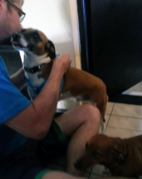 Leigh's dog Bertie in his walking harness
