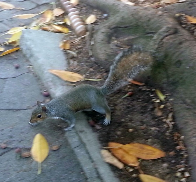 Breakfast with squirrels, Star Wars 7 premiere and year-end team lunch